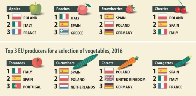 Польша - сельскохозяйственный лидер ЕС, данные статистики