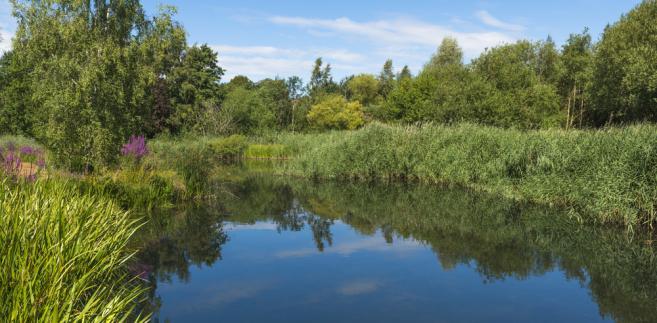 staw, woda, las, natura, przyroda